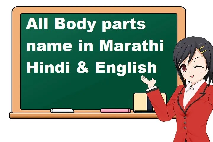 body parts name in Marathi | body parts name in Hindi & English