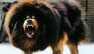 7 Ras Anjing Termahal di Dunia, Harganya Ada yang Sampai Rp 2,4 Miliar