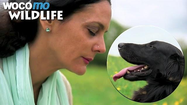 Tα ζώα αισθάνονται ένα ευρύ φάσμα συναισθημάτων και στην πραγματικότητα, έχουν συνείδηση