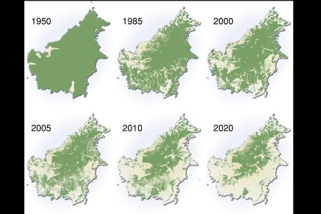 Hutan Kalimantan Menyusut setiap tahunnya