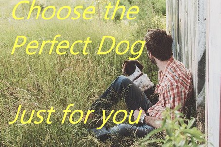 dog breed selector : Choose the Perfect Dog Just for you