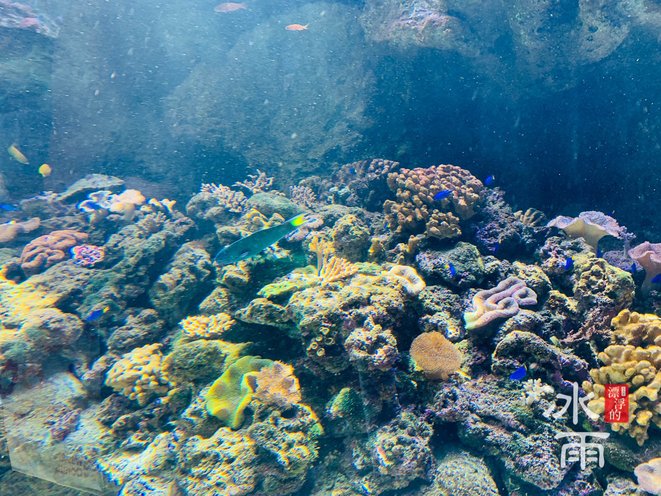 Xpark水族館|珊瑚潛行
