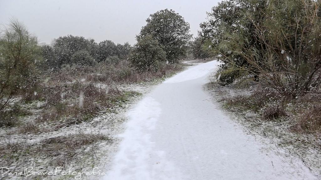 nevada en el campo
