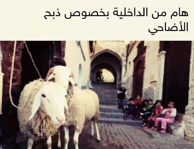 هام من الداخلية بخصوص ذبح الأضاحي بمناسبة عيد الأضحى المبارك
