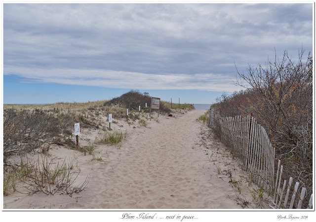 Plum Island: ... nest in peace...