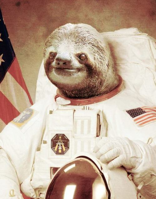 Under the Owl's Wing: DUE TO TIME CONSTRAINTS, SLOTH ASTRONAUT