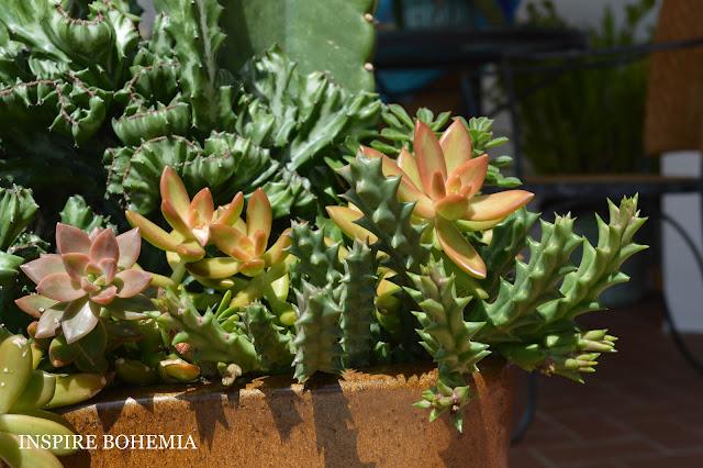 Orbea Euphorbia Sedum Cereus - Designer Cactus and Succulent Planters Garden Design Inspire Bohemia - Miami and Ft. Lauderdale Succulent Business