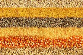 List of Wheat and Gluten Free Grains for People with Celiac Disease - Healthy T1ps