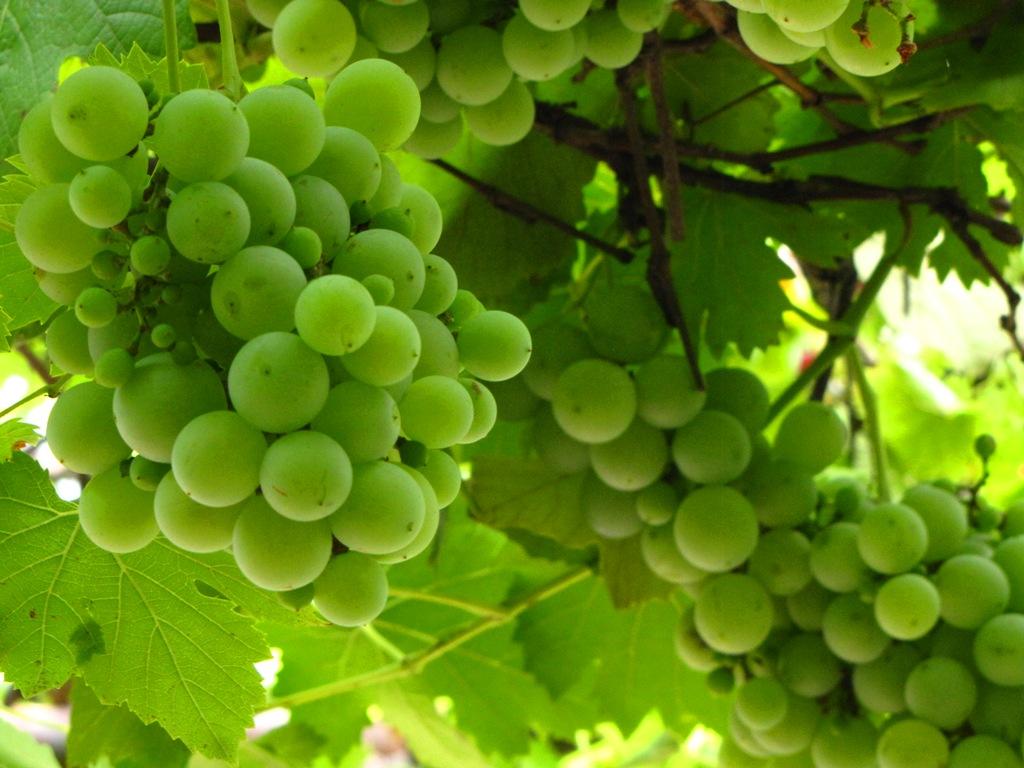 Wallpaper: Health Benefit of Grape