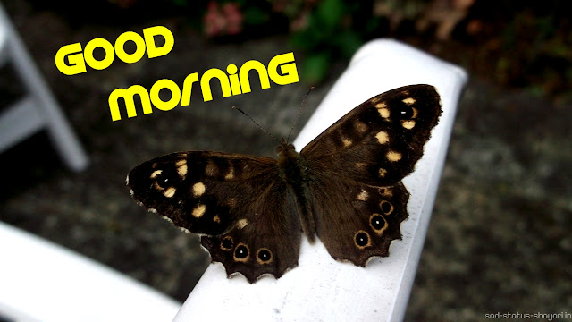 Good morning image butterfly