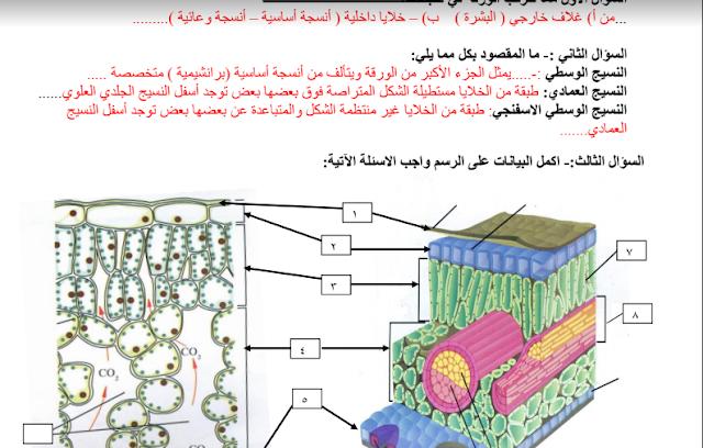 إجابة مذكرة أحياء للصف الحادي عشر علمي ثانوية سلمان الفارسي