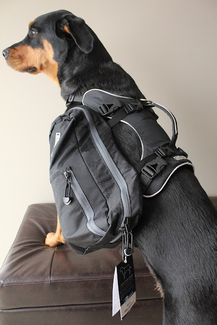 Canine Equipment Backpack Dog