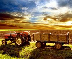 lavorare nel campo dell'agricoltura