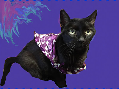 Black cat with a purple flowered bandana on a purple background