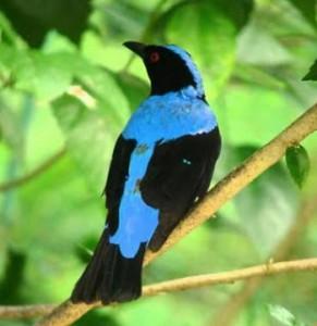 terdapat aneka macam macam jenis burung cucak Mengenal Lebih Dekat Burung Cucak Biru