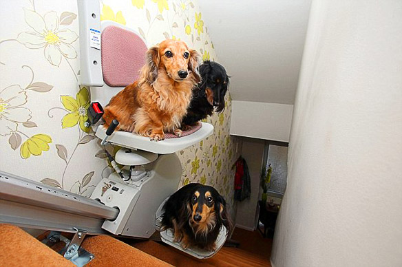 Pampered DOGS Get $2,300 ESCALATOR StairLift! | BOLD and ...