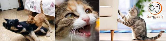 Arranhador para gatos evita estresse sem prejuízos