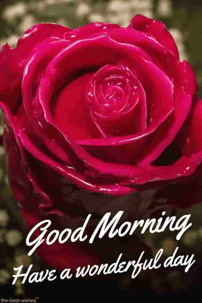 good morning red rose
