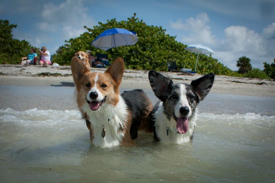 ft desoto dog beach
