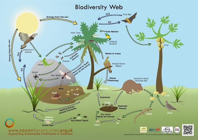 International Day for Biodiversity (IDB) 2020 in hindi : थीम, इतिहास और महत्व
