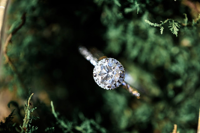 A diamond ring perched on a plant.