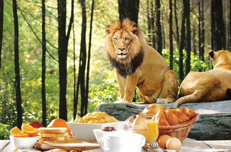Breakfast With Lion Package - Best Bali Zoo Park Package