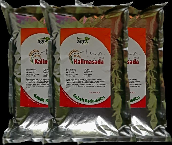 Benih Prima, benih berkualitas, padi kalimasada, Benihpadi unggul kalimasada
