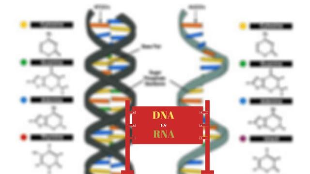 DNA-vs-RNA