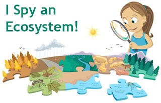 Ecosystems, 5th grade