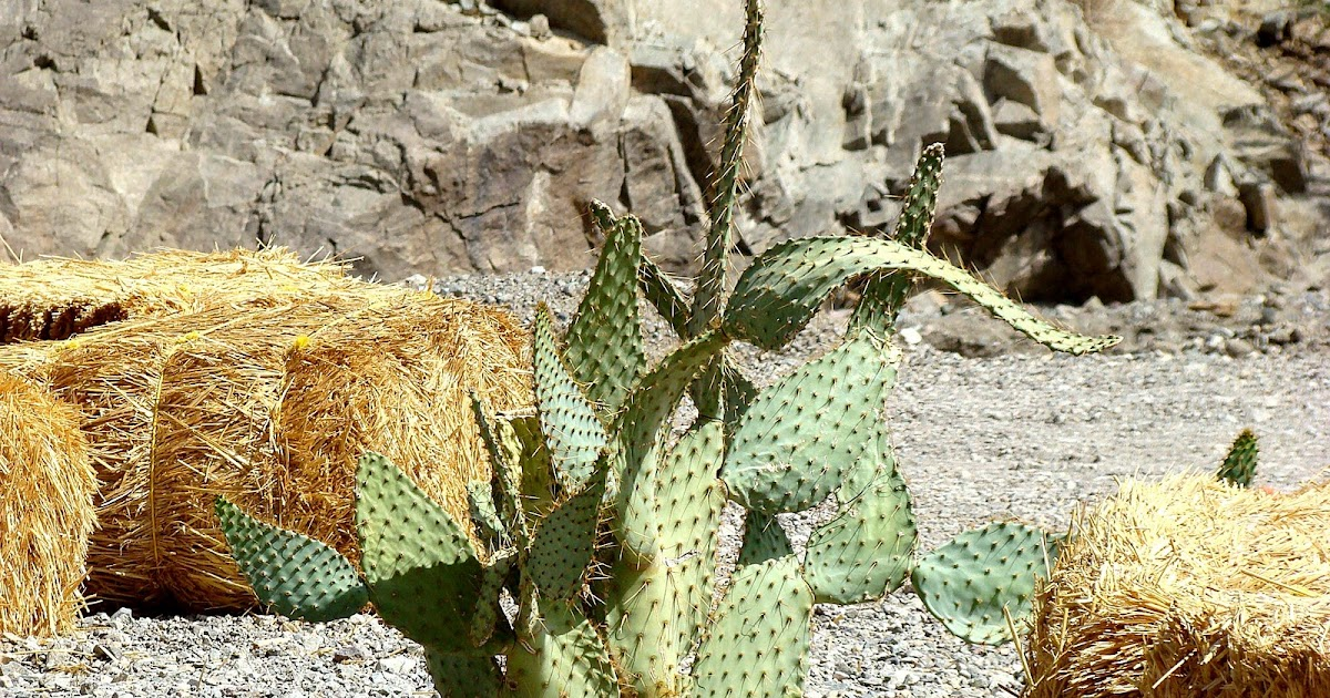 Awesome Paintings Cactus