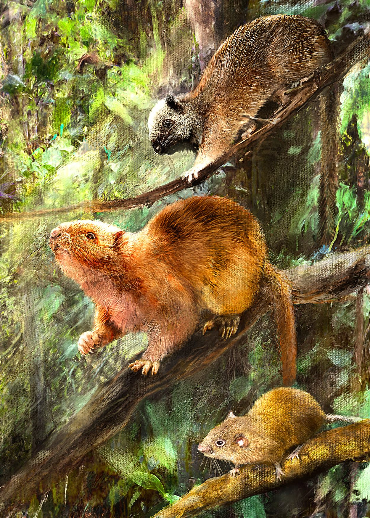 Artist's conception of the three extinct cloud rats, based on their living relatives. From the top, Crateromys, Carpomys, and Batomys.