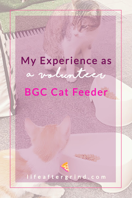 My Experience as a Volunteer BGC Cat Feeder | lifeaftergrind.com