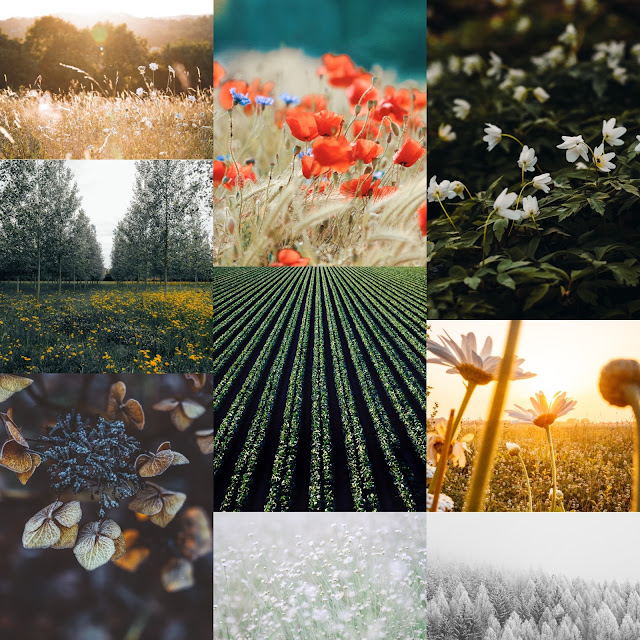 various nature and field images in a mood board