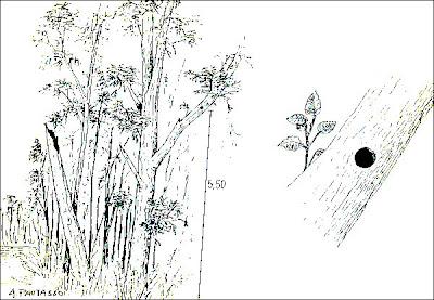 Picolezna patagónico Pygarrhichas albogularis