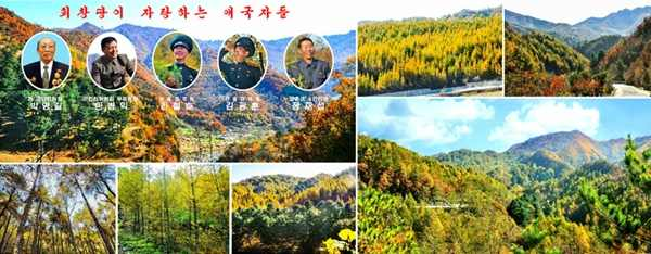 Afforestation Patriots of Hoechang County