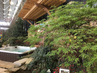 green japanese maple and hot tub