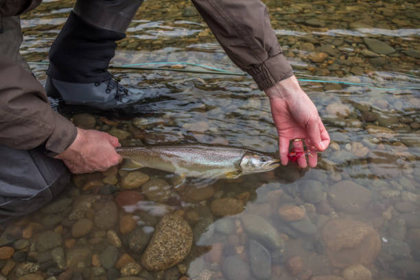 Catch and Release Fishing - How to Do it Right