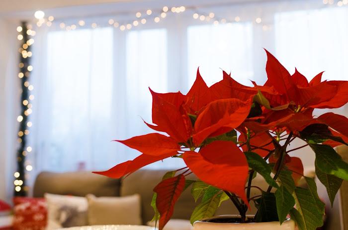 czerwono złote dekoracje świąteczne