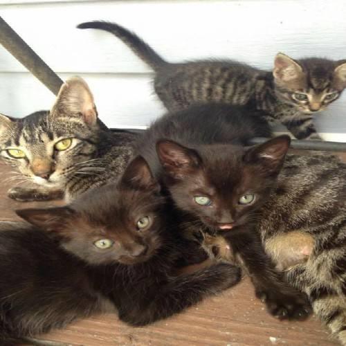 Αδέσποτη γάτα οδήγησε τα μικρά της σε κατασκηνωτές για να τα ταΐσουν