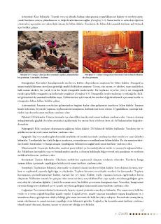 Sanat Tarihi Ders Kitabı Cevapları Koza Yayınları Sayfa 13