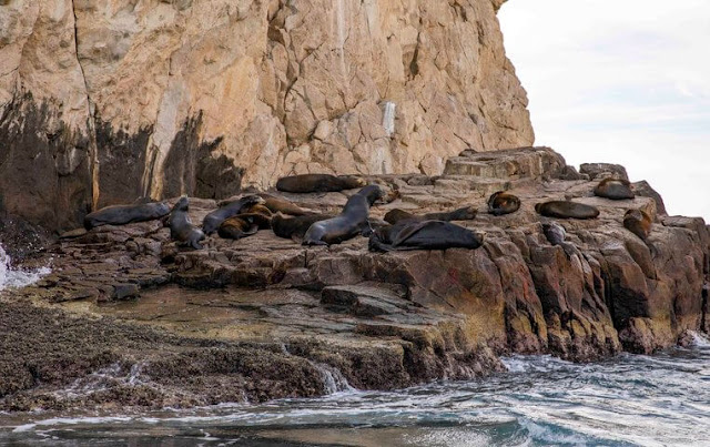 Tour of the Arch of Cabo San Lucas