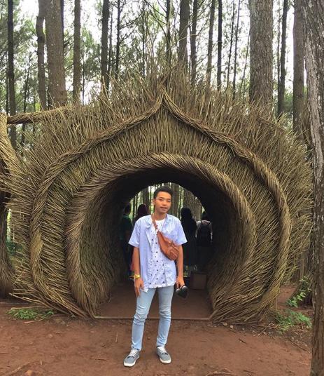 spot foto hutan pinus pengger