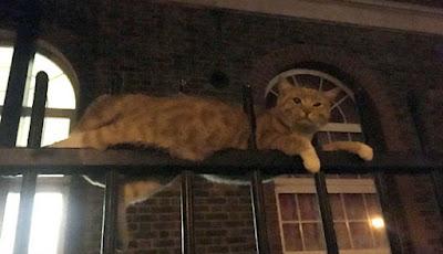 Kucing sembilan nyawa tertancap di pagar besi