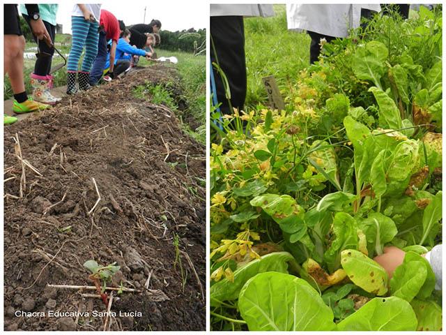 Prontos para trabajar en el cantero/ prontos para cosechar - Chacra Educativa Sta. Lucía