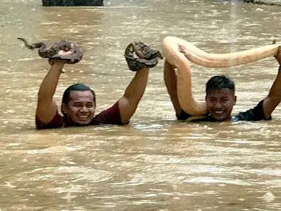 Redah Banjir Untuk Selamatkan Ular