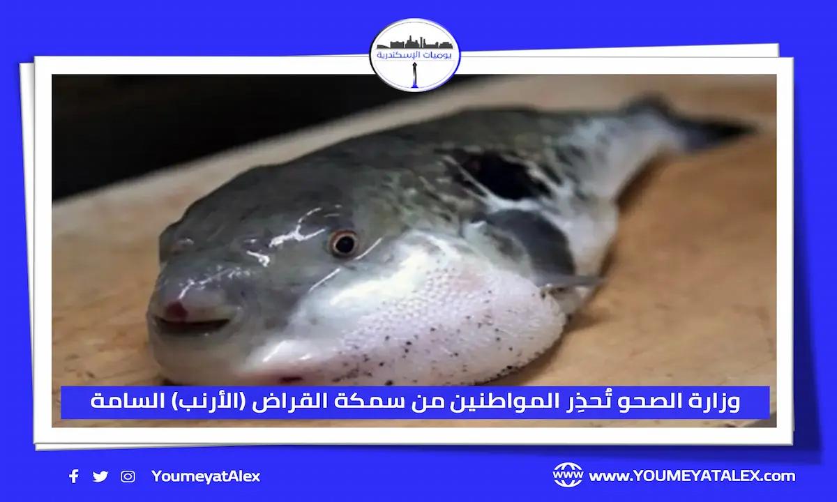وزارة الصحة المصرية تُحذِر المواطنين من سمكة القراض (الأرنب) السامة