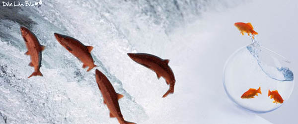 Cá Hồi và nguồn cội