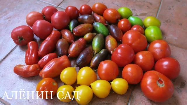 томаты, помидоры, разноцветные