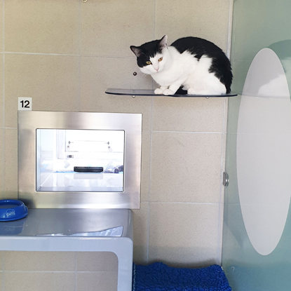 black-and-white cat sitting on shelf in Cats Protection pen