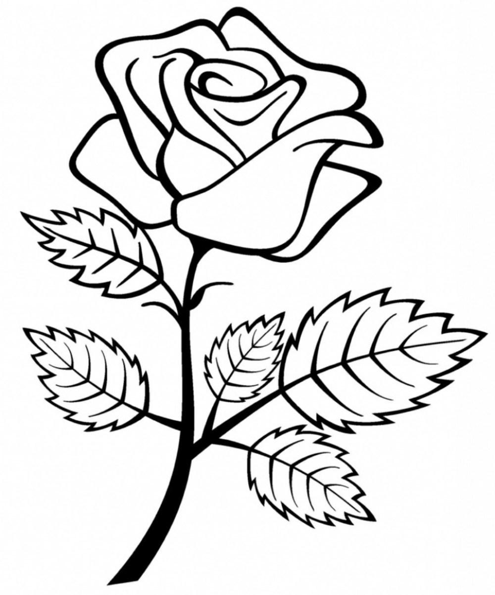 Cara Mewarnai Bunga Mawar Dengan Pensil Warna Collection Images
